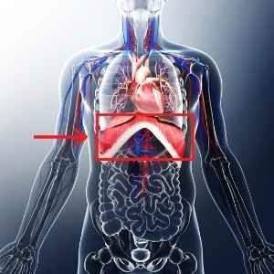 diaphragm location